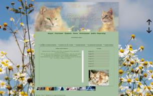 Скриншот сайта Коты-воители. Свободная жизнь