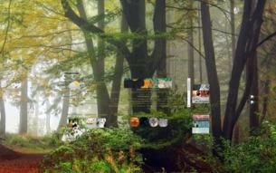 Скриншот сайта КВ: жизнь в лесу